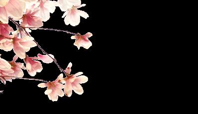 branch-left-spring